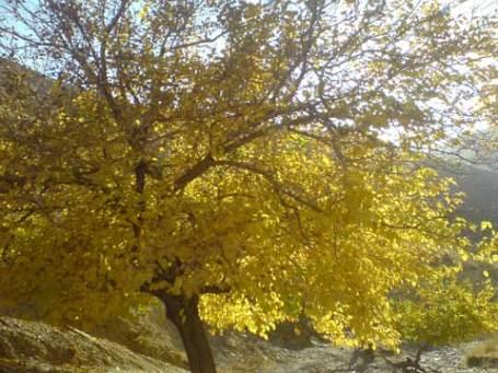 زیبایی پاییز